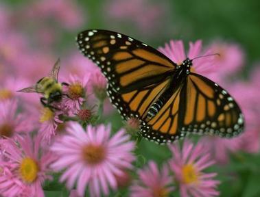 Monarch31jg1514